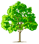Description: tree1